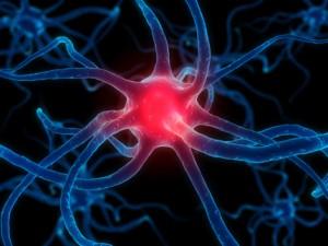 Maximize Your Brain