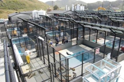 Pools & Pens at The Marine Mammal Center