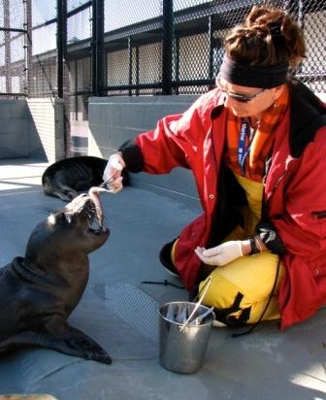 A volunteer at The Marine Mammal Center feeds a young elephant seal
